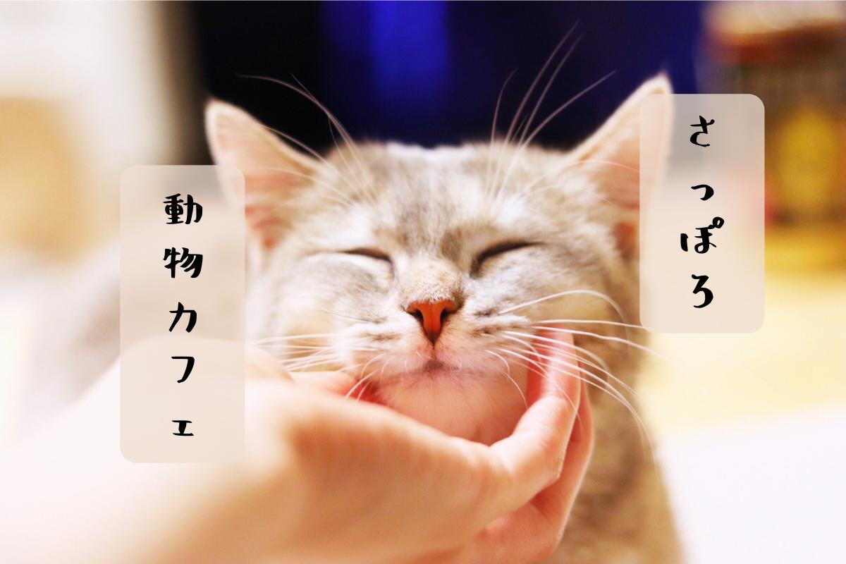 札幌市内の動物カフェ・猫カフェ・ドックカフェ・フクロウカフェ
